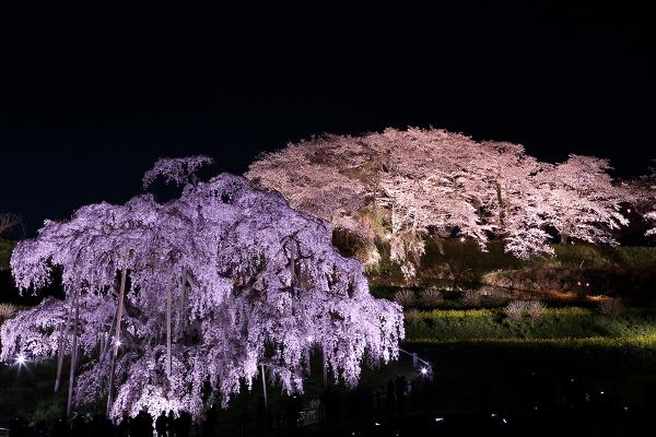 福島 三春滝桜