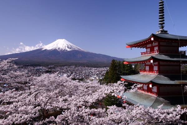 山梨 新倉山浅間公園の桜